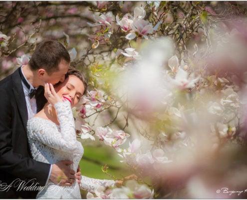 Wedding in the Hluboka Castle